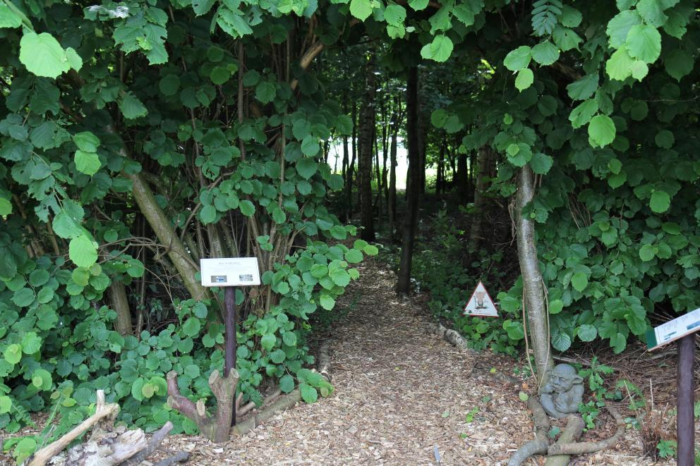 Trollenbos - Vrijheid: bio zelfrealisatie tinctuur