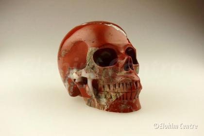 Rode Jaspis human schedel