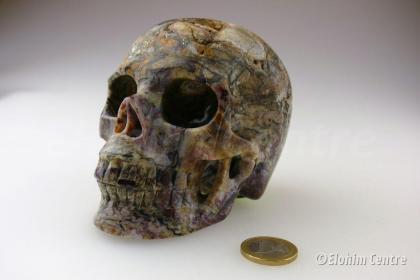 Menselijke schedel, human schedel - Pietersiet