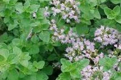 Elohim planten bio  - Marjolein
