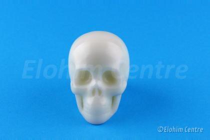Witte jade edelsteen Elohim menselijke schedel, human schedel