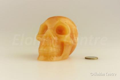 Oranje Calciet menselijke schedel, human schedel