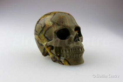Septaria, Septarie menselijke schedel, human schedel